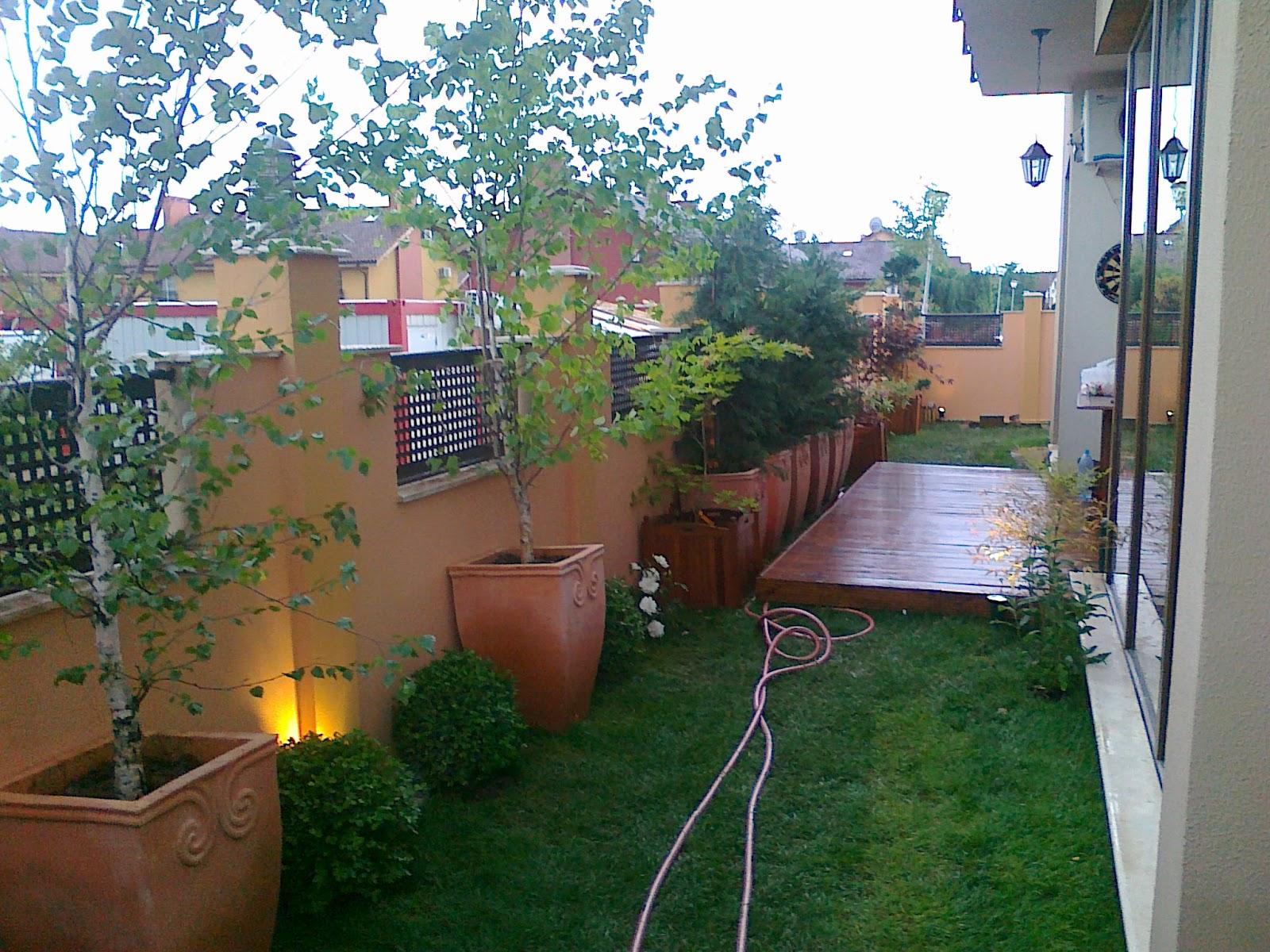 Immagini aiuole, terrazzi e giardino