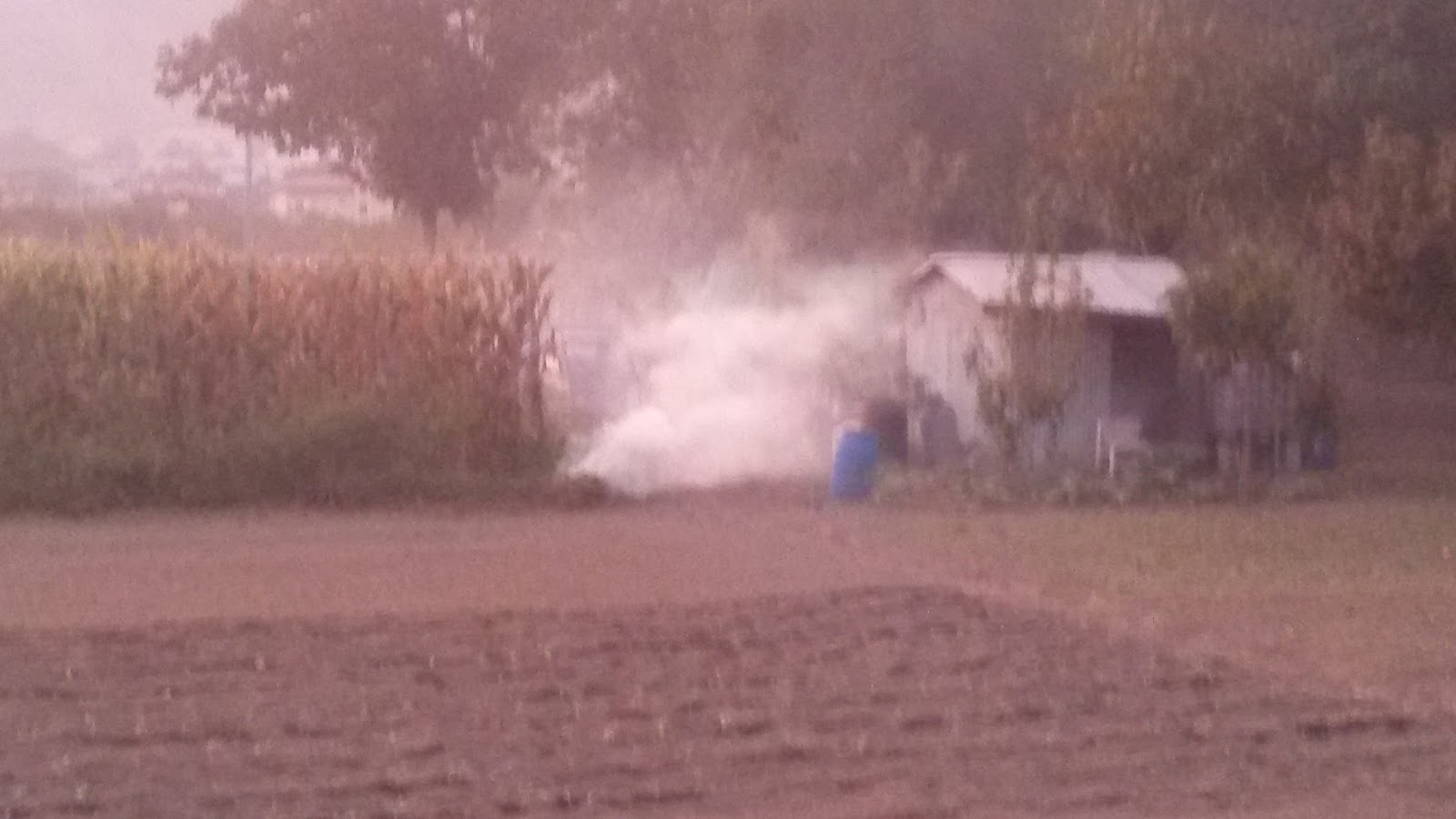 Bruciatura dei residui vegetali e impatto ambientale