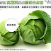 [惡搞實證] 高麗菜葉可有效緩解膝關節炎疼痛 (Efficacy of Cabbage Leaf Wraps in the Treatment of Symptomatic Osteoarthritis of the Knee)