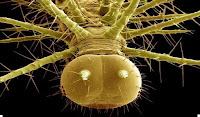 гусеница фото