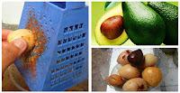 https://steviaven.blogspot.com/2017/11/beneficios-usos-semillas-aguacate.html