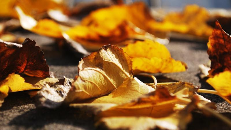 Autumn Leaves 2 HD