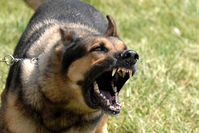Dog Behavior Problems: Help! My Dog is a Nuisance When He Misbehaves!