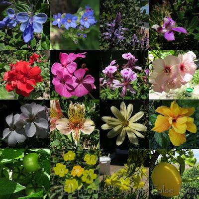 November garden flowers