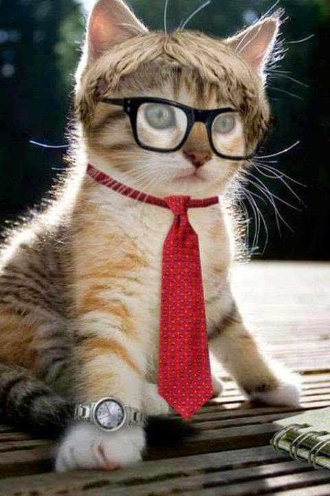 Pretty Cute Cats Picture Dps For Facebook Profile | Best ...
