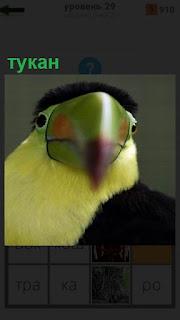 1100 слов птица тукан с крепким клювом 29 уровень