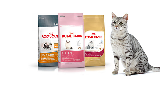 Cat with Kidney problems -- not eating special food?