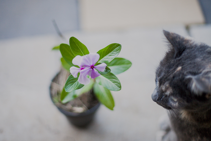 flower and cat