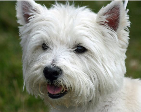 Pictures Of Different Small Breed Dogs