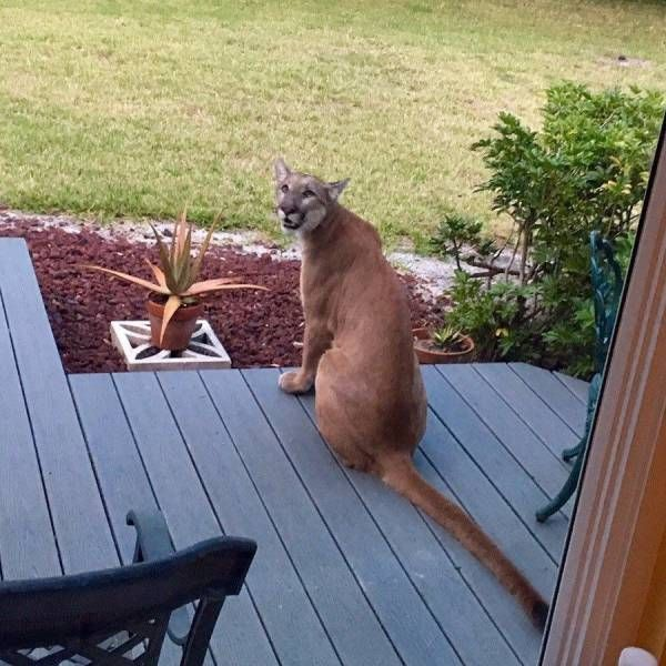 Funny animals of the week - 22 September 2017, funny animals, best cute animal images