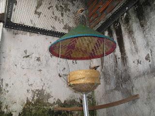 Burung Cucak Rowo - Pemilihan Lokasi yang Cocok dan Srategis Untuk Penangkaran Burung Cucak Rowo