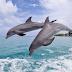 Γιατί τα δελφίνια πηδούν έξω από το νερό;