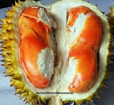 durian merah asli banyuwangi jawa timur