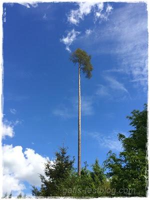 rauchender Baum