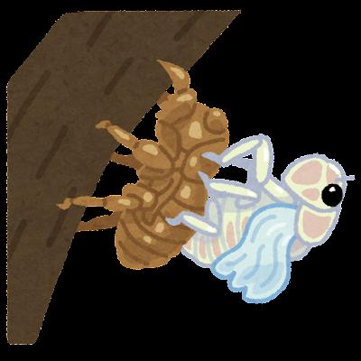 蝉の羽化のイラスト