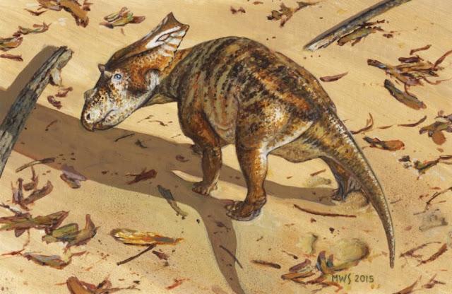 Charting the growth of a juvenile Chasmosaurus
