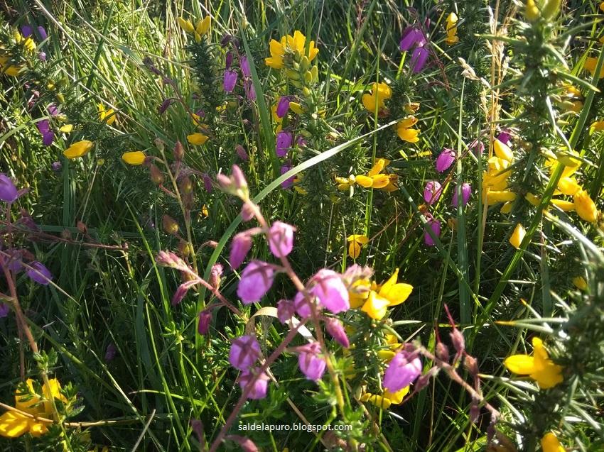 flores-monte-asturias