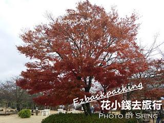 松山城賞紅葉