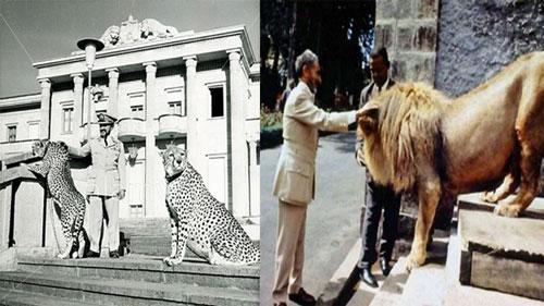 Raja Singa Persahabatan Raja Muslim Dengan Anjing