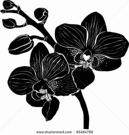 Gambar Bunga Anggrek Hitam Putih Gambar Bunga