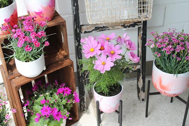 Sommerbepflanzung Garten Cosmea Gartennelken Pretty Pink DIY Anleitung Blumentoepfe marmorieren mit Nagellack Jules kleines Freudenhaus
