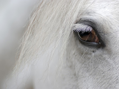 Letest and best Horse HD Wallpapers | Horse HD Wallpapers | Horse Desktop Backgrounds,Photos | Free Desktop Hd Wallpapers Horse |HD phptos animals | hd image Horse | hd picture Horse |hd picks Horse | forest animals hd wallpaper | latest hd wallpaper | animals hd wallpaper | Dog hd photos | Horse hd wallpaper | Horse hd images | Horse hd wallpaper | white horse hd wallpaper | black horse hd wallpaper | running horse hd wallpaper | horse couple hd wallpaper | best hd wallpaper hours | beautiful hd wallpaper horse | horse hd image | horse hd wallpaper | horse hd picturs | horse hd pick
