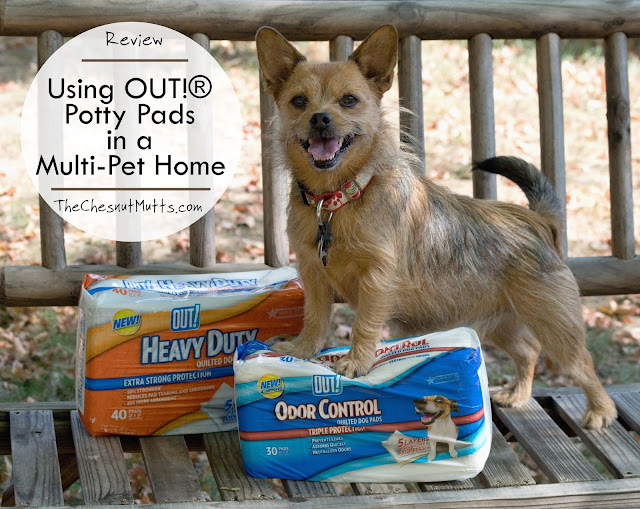 Review: Using OUT!® Potty Pads in a Multi-Pet Home