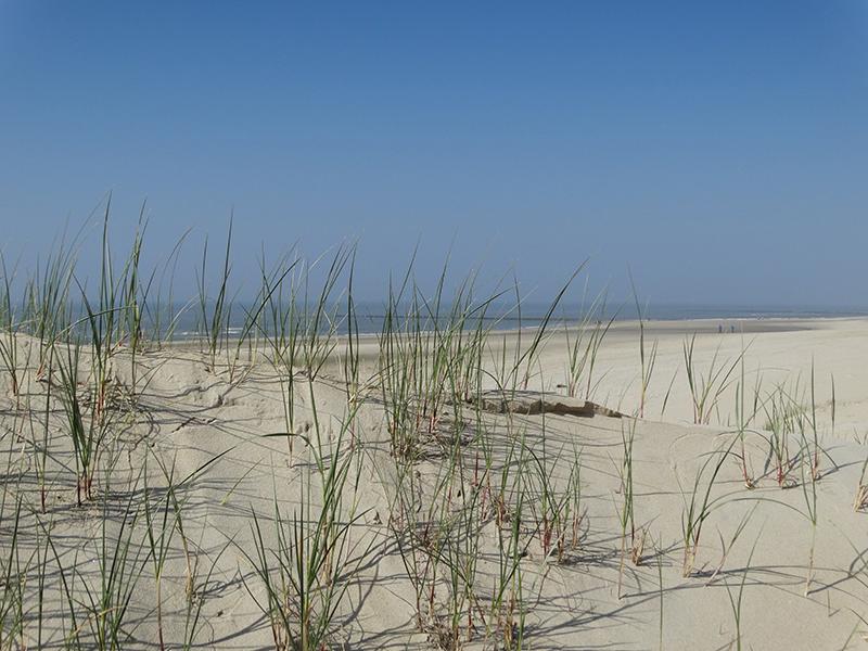 texelpics: texel beach near paal 12
