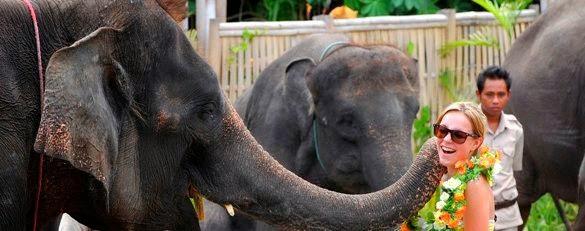 Paket Safari Explore Taman Kebun Binatang Bali Safari dan Marine Park - Bali, Paket, Harga Tiket Masuk, Biaya Pendaftaran, Kebun Binatang, Aktivitas, Liburan, Wisata, Tur, Atraksi