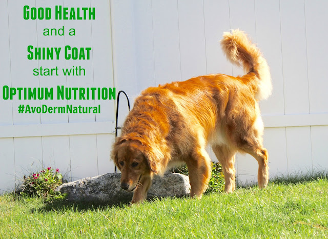 AvoDerm Natural dog food revolving menu grain free diet