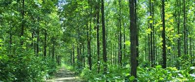Bioma Hutan Musim