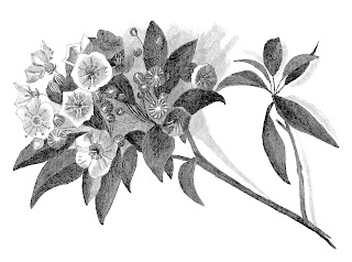 https://4.bp.blogspot.com/-cWA8Jun8U38/WCZv3q05mvI/AAAAAAAAeLw/OtHheSpT9skidks8IKHXvLU5b6lDHNQRQCLcB/s320/flower-illustration-pencil-drawing-branch-leaves-digilt.jpg
