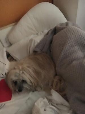 Trixie Snuggling Jesse