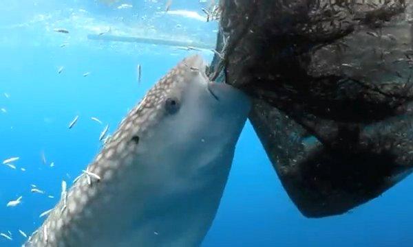 Whale Shark Dolphin Photos Download Photos
