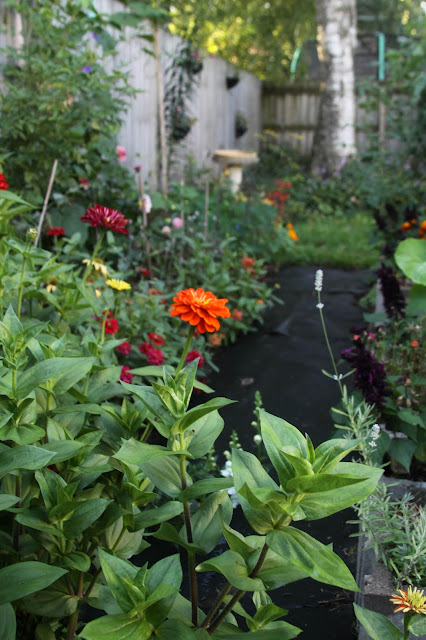 garden, summer, autumn, zinnias, lavender, flowers, Anne Butera, My Giant Strawberry