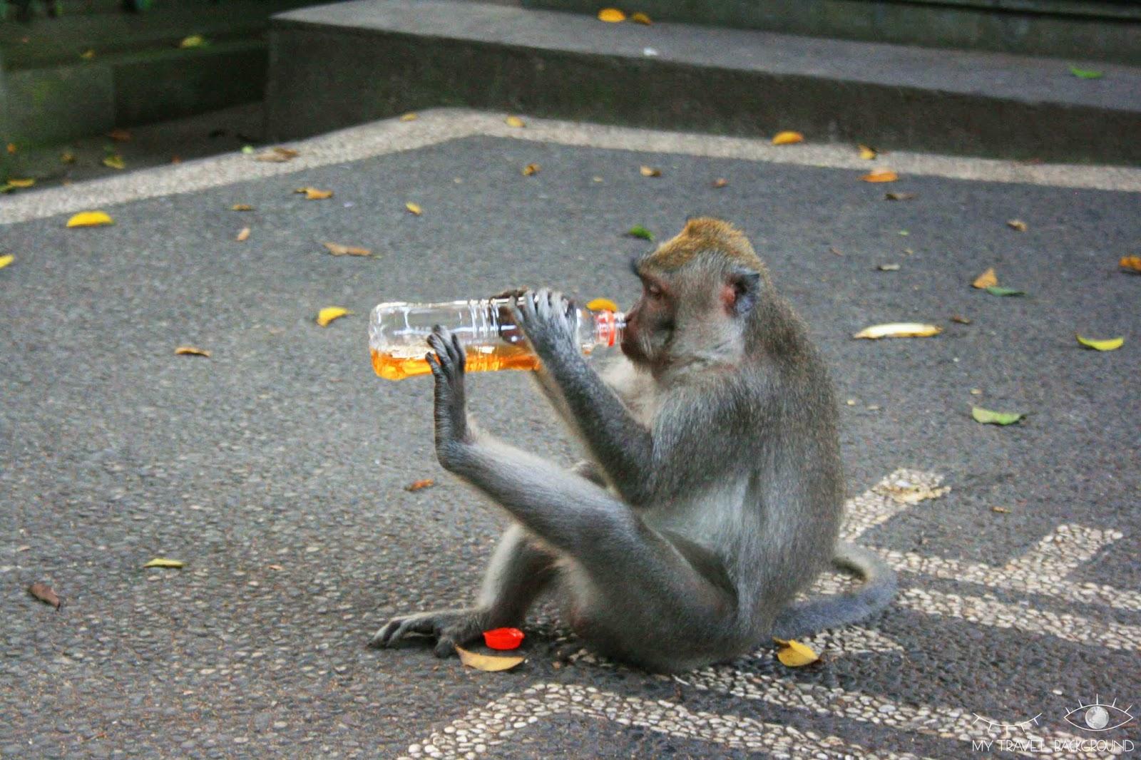 My Travel Background : 15 photos prises au bon moment ! Indonésie