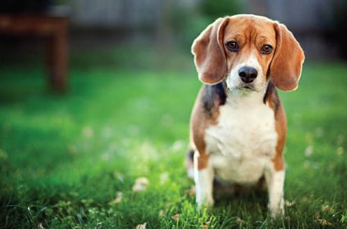 sad dog sitting on grass