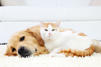 consider-your-pets-when-renting