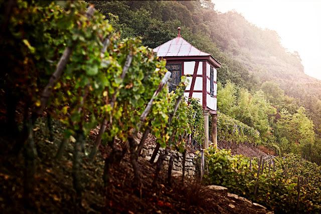 Das markante Weinbergshäuschen vom Disibodenberg ziert als Zeichnung auch die Flaschenetiketten und das Logo des Weingutes Klostermühle Odernheim. Foto: DWI