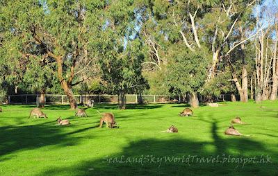 Cleland Wildlife Park