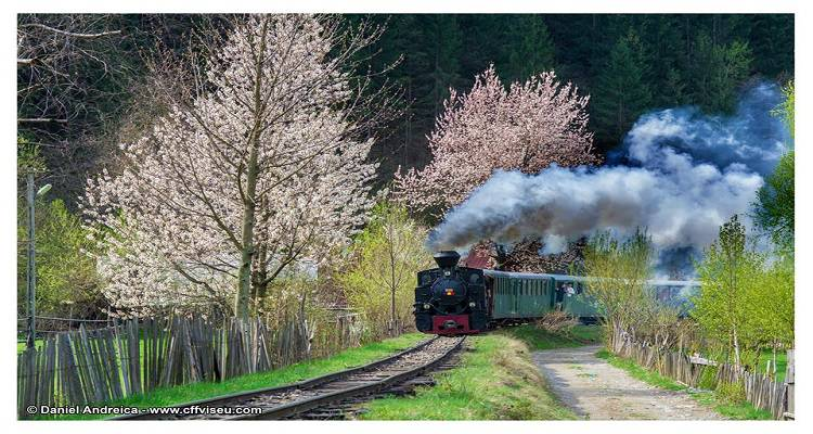 Maramures, Mocãniţa, the Steam Train on Vaser Valley