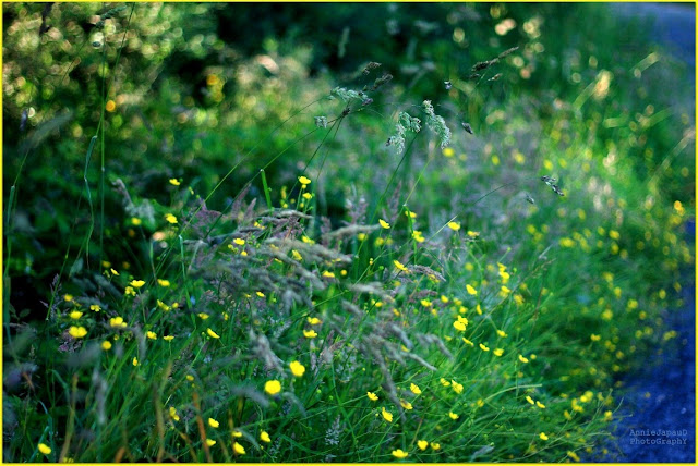 grass, flowers, green,  Summer light © Annie Japaud Photography 2013