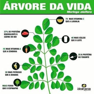 Benefícios do Moringa Arvore da Vida para saúde