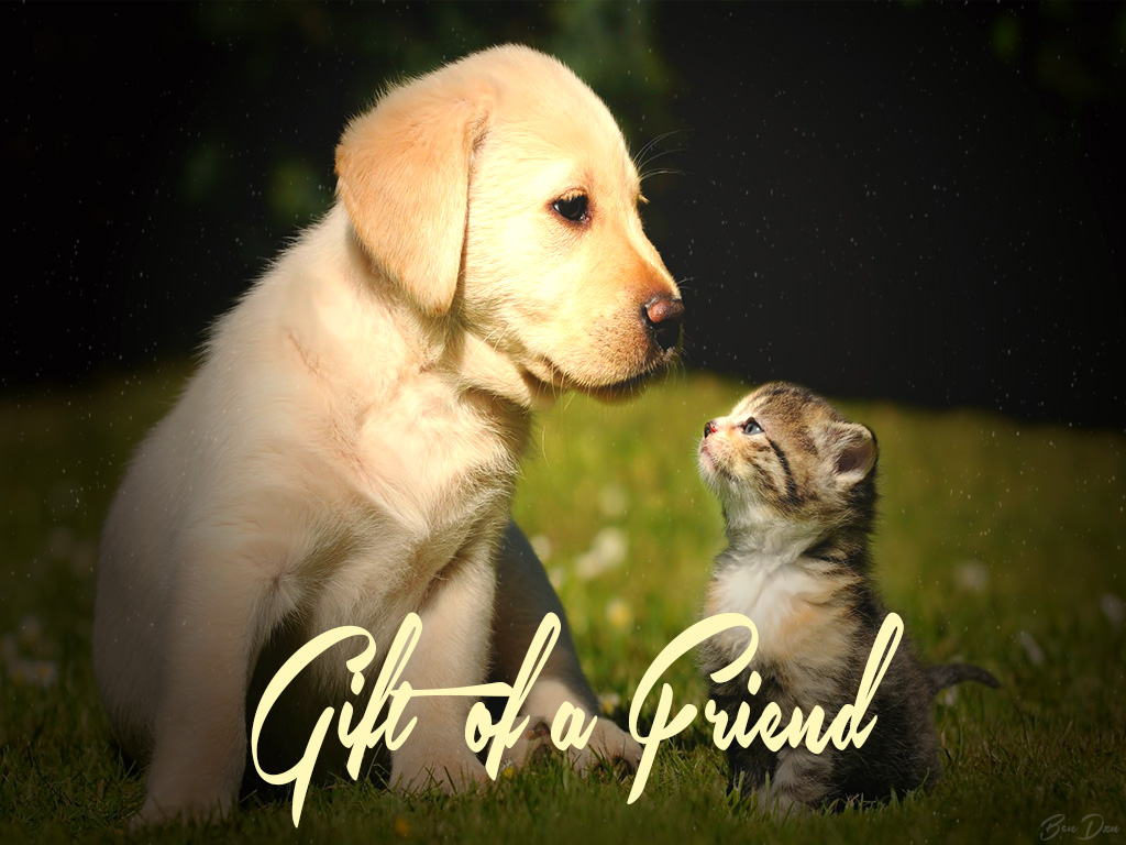 Gift Of A Friend Dog and Cat Friendship