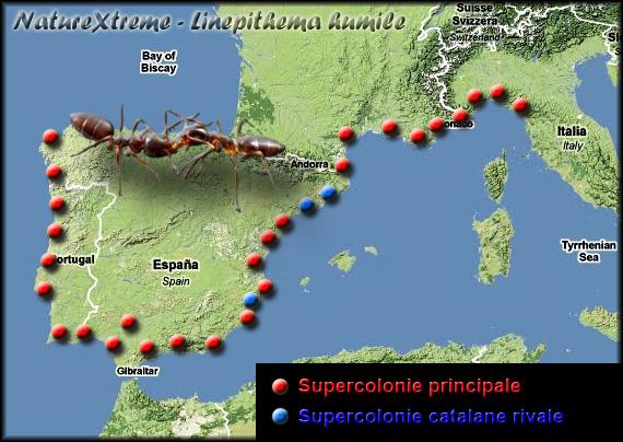 http://4.bp.blogspot.com/-cY9QaDbaU54/TZ3qK_BOIsI/AAAAAAAAAEg/k931w58EuNk/s1600/repartition-linepithema-humile-europe-nature-extreme.jpg