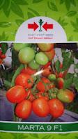 Benih, Marta 9, Marta 9 murah,tomat, tahan virus,kuning, keriting, unggul, dataran rendah, tinggi, petani, Cap Panah Merah