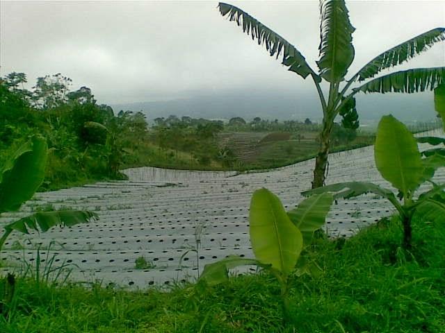Foto(5187) Jual Tanah Milik Luas 12 Ha, Lokasi puncak Jual tanah di cipanas jual tanah di puncak