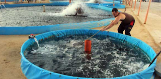 Catfish farming in recirculation system tank atau c Kabar Terbaru- BUDIDAYA IKAN LELE SISTEM C-FIRST