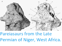 http://sciencythoughts.blogspot.co.uk/2014/06/pareiasaurs-from-late-permian-of-niger.html