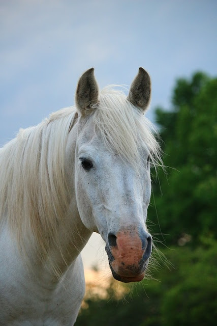 Ternak Kuda